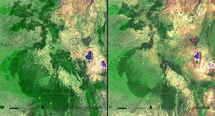 肯亞毛森林變化。圖/遠見提供