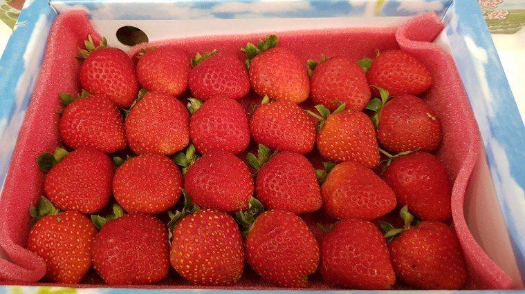 農業藥物毒物試驗所日前公布106年蔬果農藥殘留監測報告,報告中顯示,水果類以草莓...