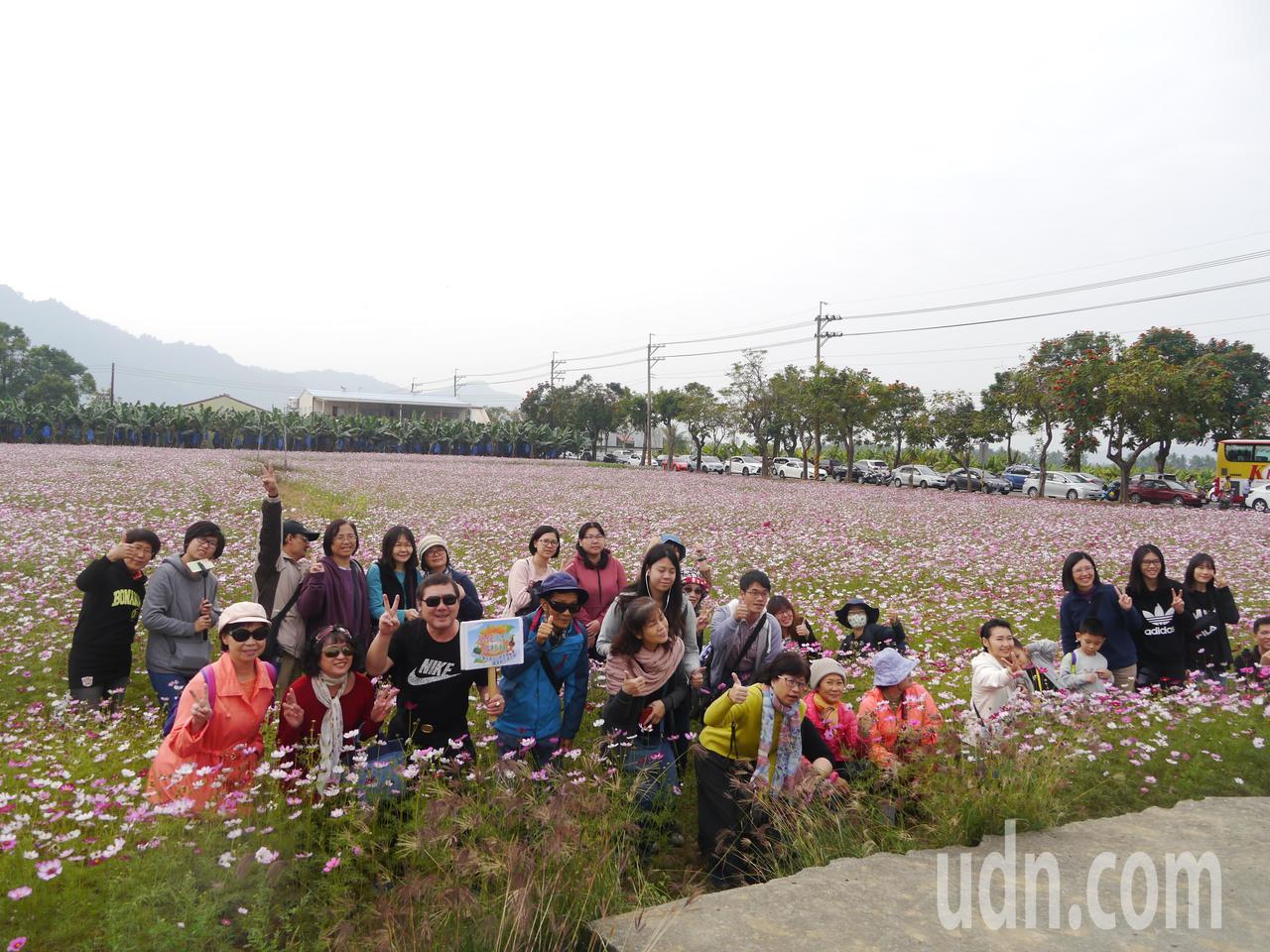 花田開園,吸引許多外地遊客到高雄賞花。記者徐白櫻/攝影