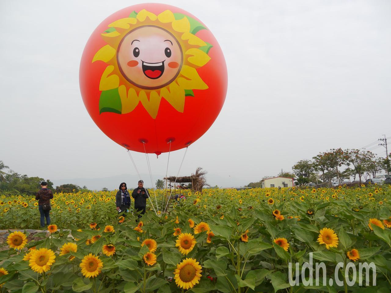 杉林花田總面積30公頃,共分成四個花區。記者徐白櫻/攝影