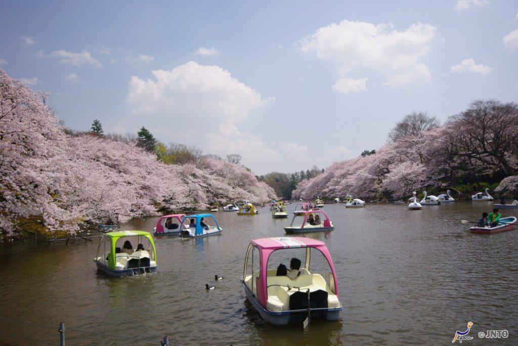 ▲日本櫻花百選推薦-井之頭恩賜公園。(圖/©Yasufumi Nishi/© J...