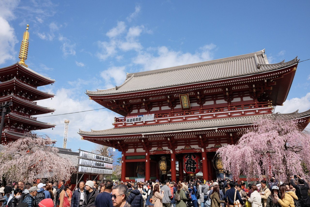 根據日本氣象株式會社最新櫻花前線,東京3月24日就會開花。記者黃仕揚/攝影