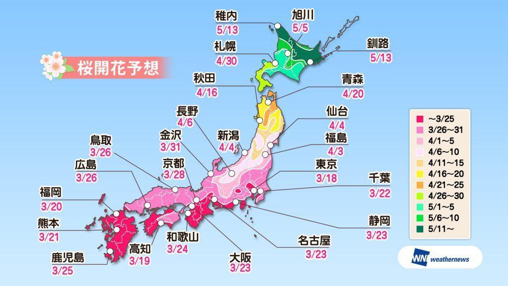 weathernews的櫻花預測,3月18日東京就會開花。圖/摘自官網