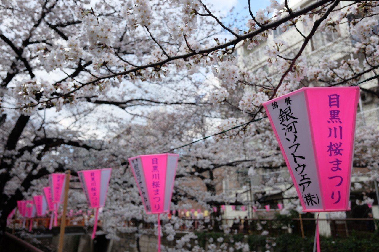 中目黑是東京賞櫻人氣景點之一。記者黃仕揚/攝影