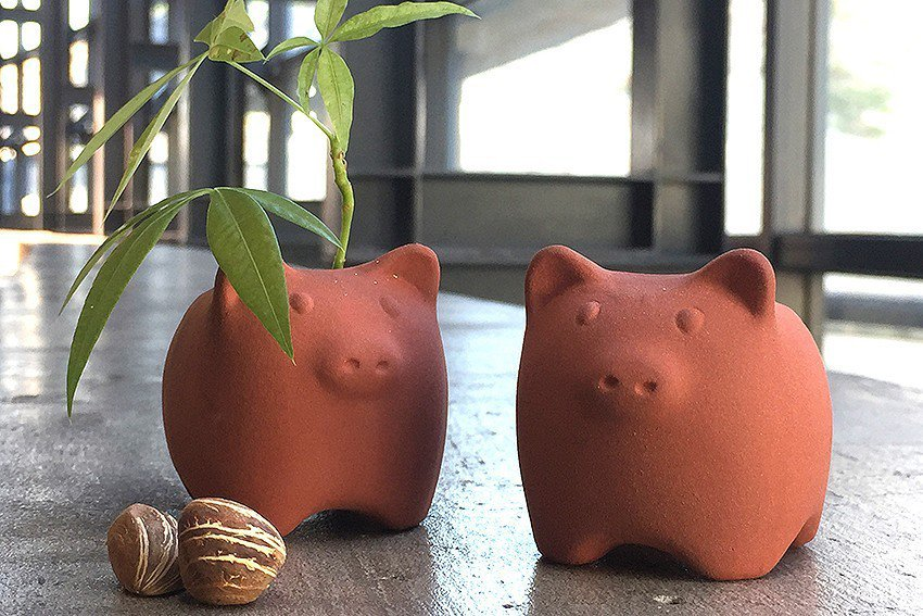 隨朱泥豬附贈俗稱發財樹的馬拉巴栗種子,希望大家來年都發財。 陶博館/提供