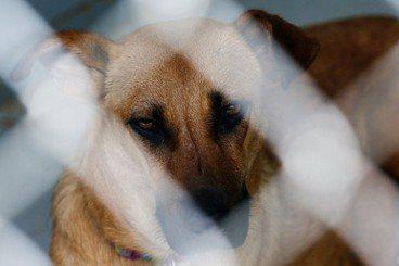 吳宗憲/動物虐待,是施虐者用來控制受虐者的殘酷手段