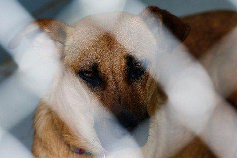 動物虐待,是施虐者用來控制受虐者的殘酷手段