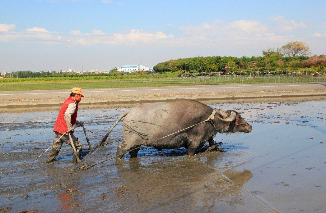 隨著高齡化帶來的人口凋零,農村裡這些熟悉農務的老人家也愈來愈少。圖/報系資料照