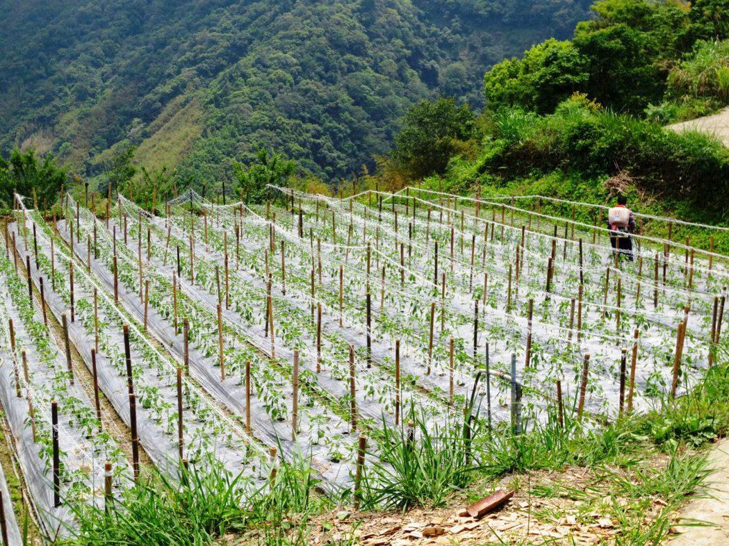 農民不僅要會種植,還必須具備足夠經營能力才能維持農場運作。圖/讀者提供