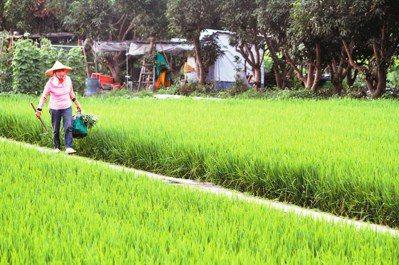 台灣農業的未來,可以朝向小農負責生產、大農負責經營管理的角度去發展。圖/報系資料...