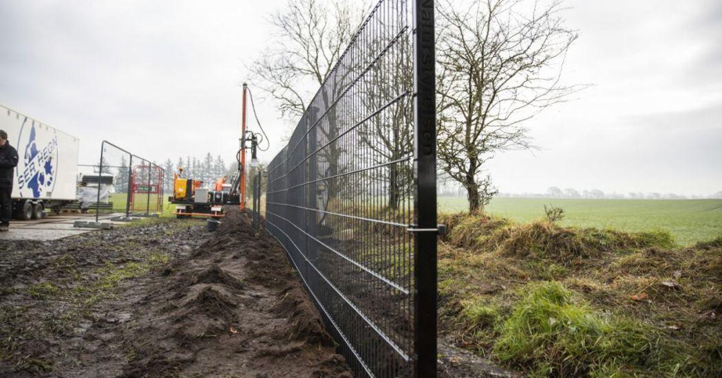丹麥與德國邊境建立的「防豬圍欄」。 圖/法新社
