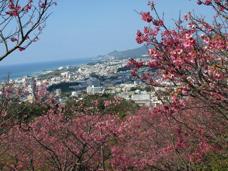 「名護中央公園」有總長2公里的櫻花步道。圖/樂天旅遊提供