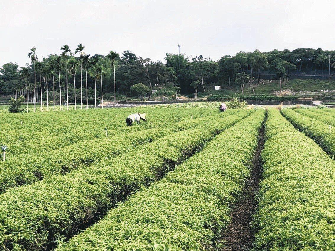 農業移工外展服務試辦計畫,由農會擔任雇主引進移工,負擔管理責任、提供薪資、膳宿。...