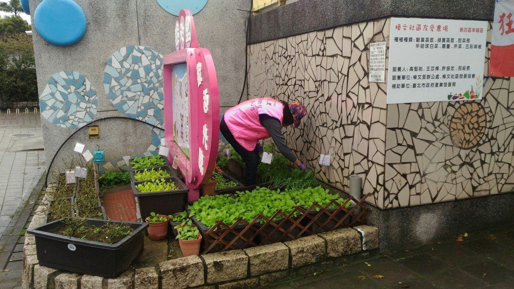 每月我與老伴為社區治安巡守兩次,也認養社區綠化小菜園種菜。 圖/王苡樺(台北市)