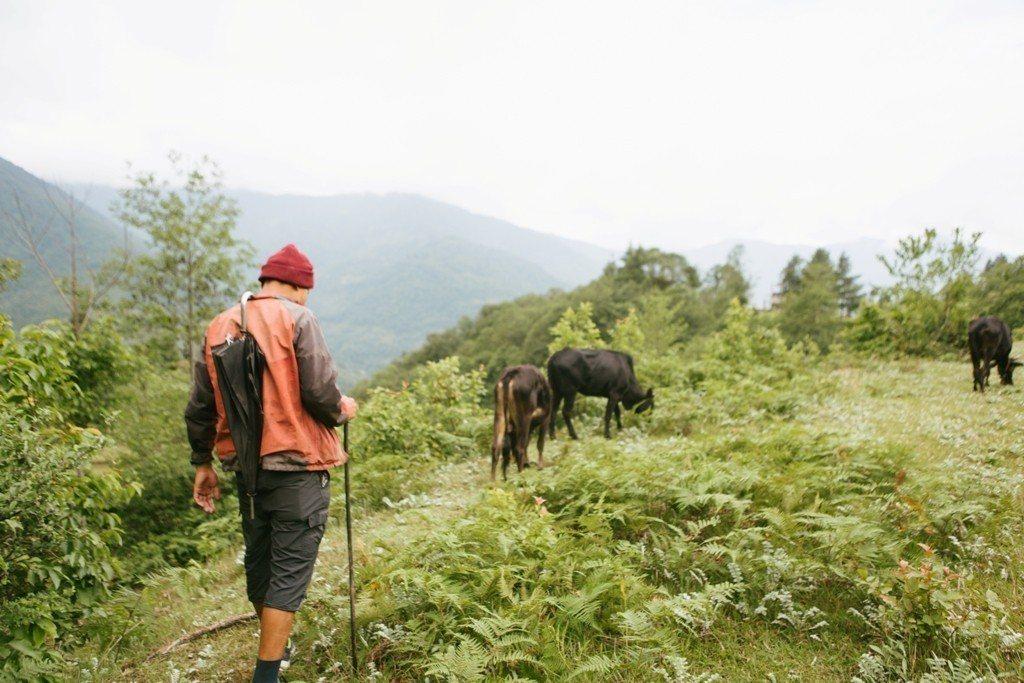 協助放牧工作,每天耗時2小時。圖/遠山呼喚提供