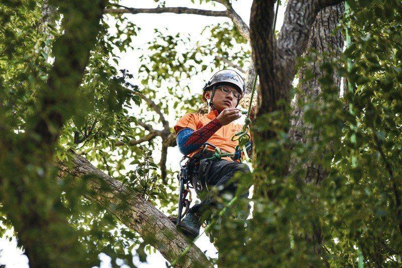 修樹工作猶如消防員救火,不僅耗體力,更務求專注。