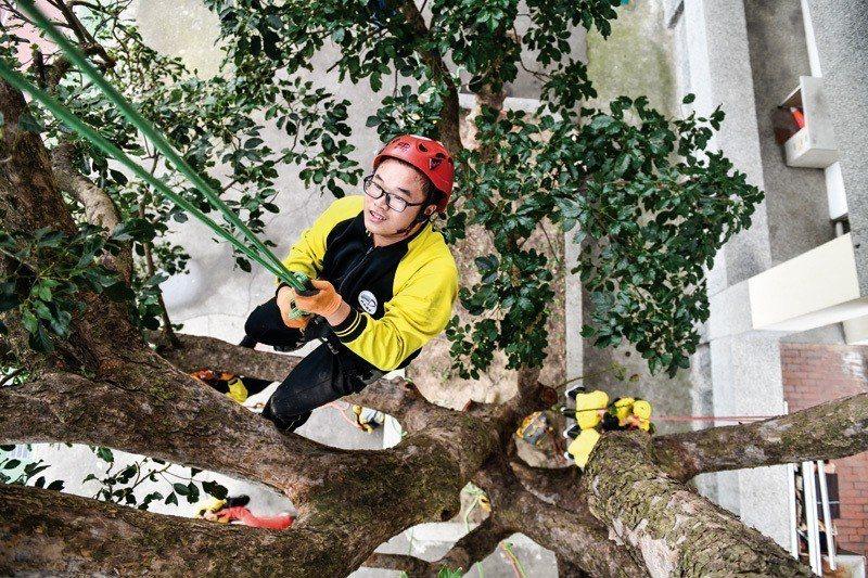 攀樹運動激勵莘莘學子,只要不放棄,就可以靠自己的努力一步步地往上爬。