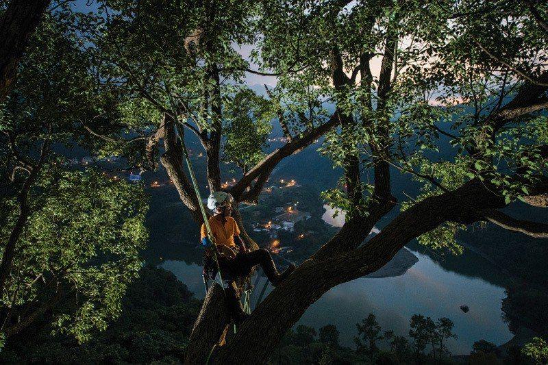 坐在大樹的肩上,就能看見不曾見過的新風景。
