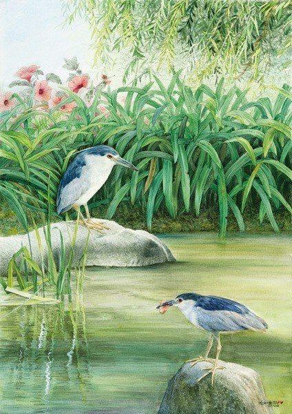 柯鴻圖用夜鷺來表述出寧靜的意境。圖為《寧靜》水彩畫。