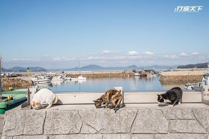 真鍋島是貓奴的天堂之島。