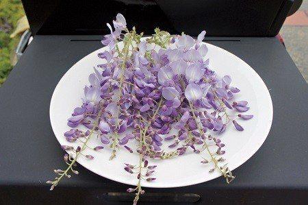 紫藤是一種風雅的美食 (照片/周芬娜提供)