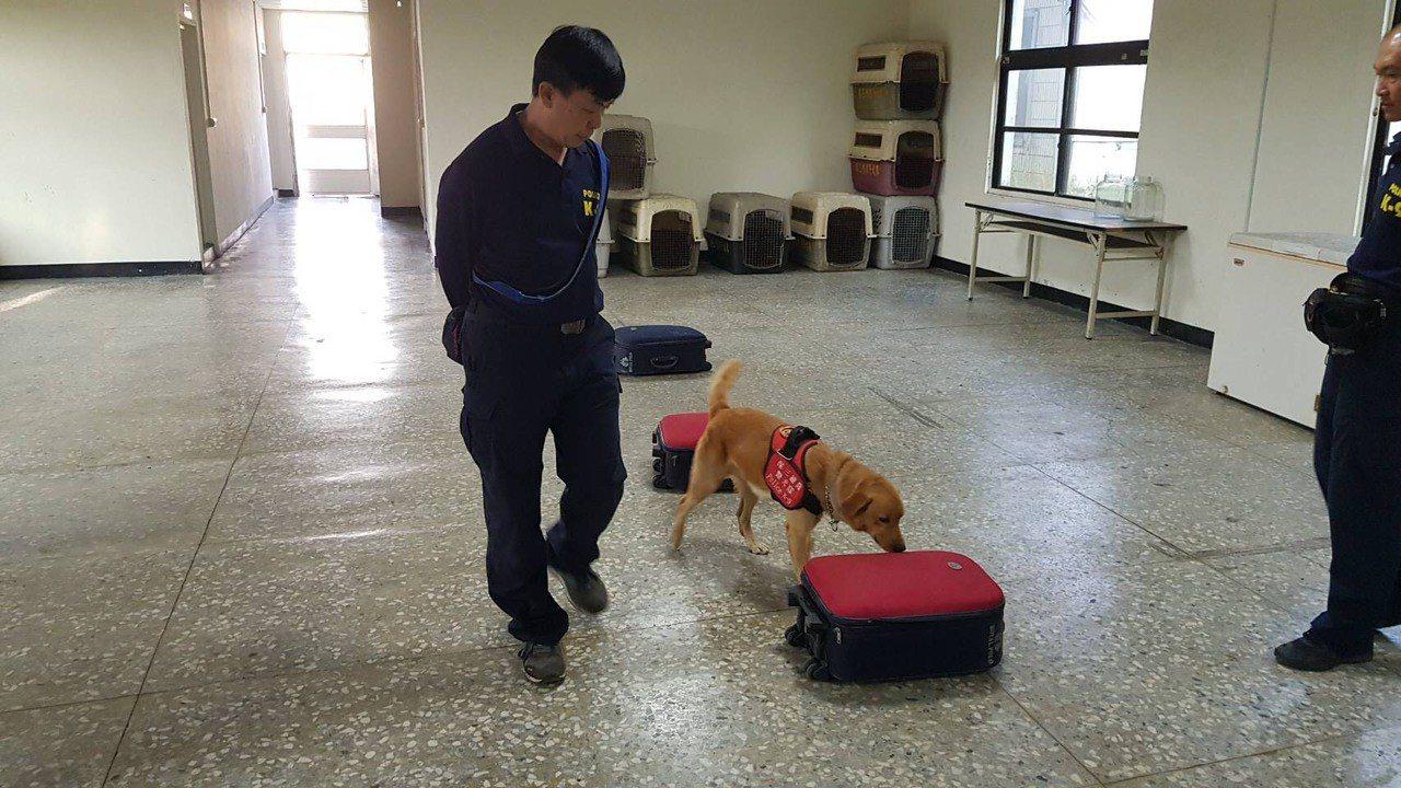 為阻絕非洲豬瘟由國境大門入台,保三總隊正加強訓練檢疫犬,強化邊境防疫工作。圖/保...