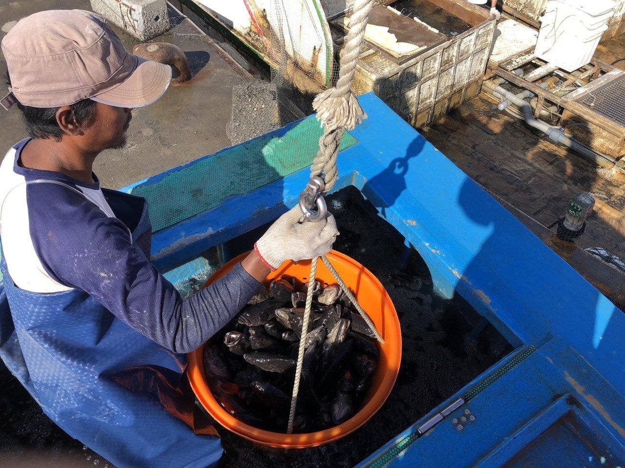 高雄石斑主要銷往大陸與香港,元月份外銷量為987公噸,約為2.5億元。圖/市府海...