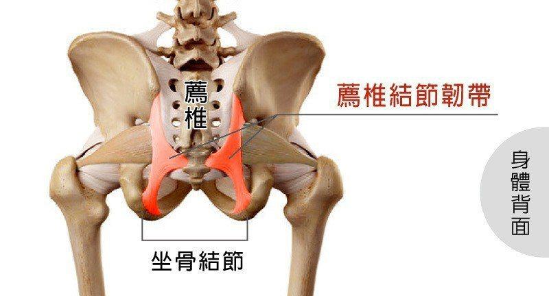 薦椎結節韌帶撕裂傷可能引發假性坐骨神經痛 圖/菁英診所 提供