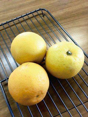大吉大利,每年的春節前後是柑橘柳橙大盛產的時候,各種柑橘柳橙的果肉多汁香甜,外觀...