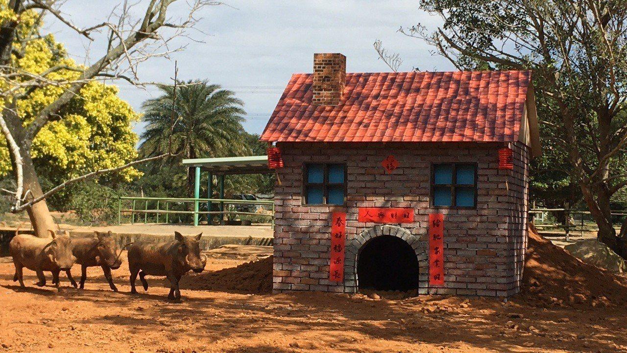 六福村為全台灣唯一擁有非洲疣豬,適逢金豬年,園方結合三隻小豬童話故事,為園區內的...