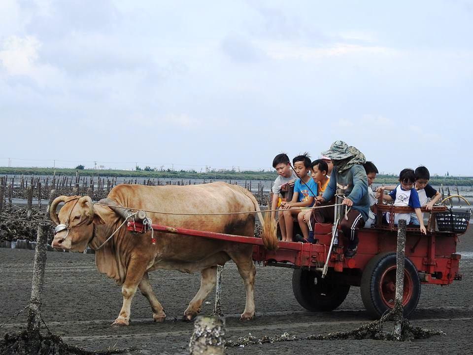 芳苑潮間帶坐海牛車觀光是世界獨有的親子遊。聯合報資料照片