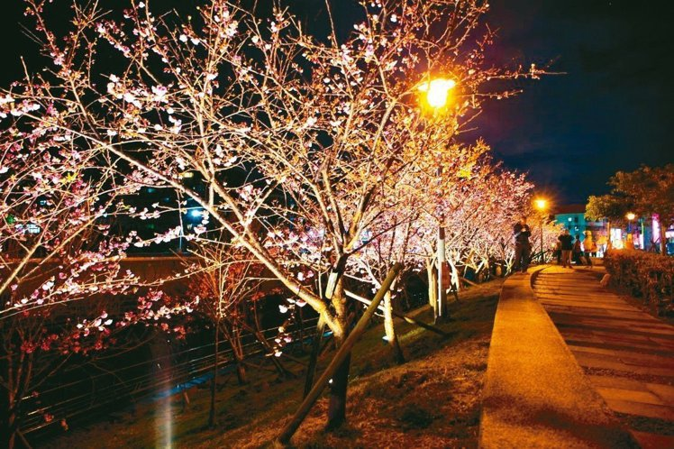 內湖樂活公園賞夜櫻別有風情。
