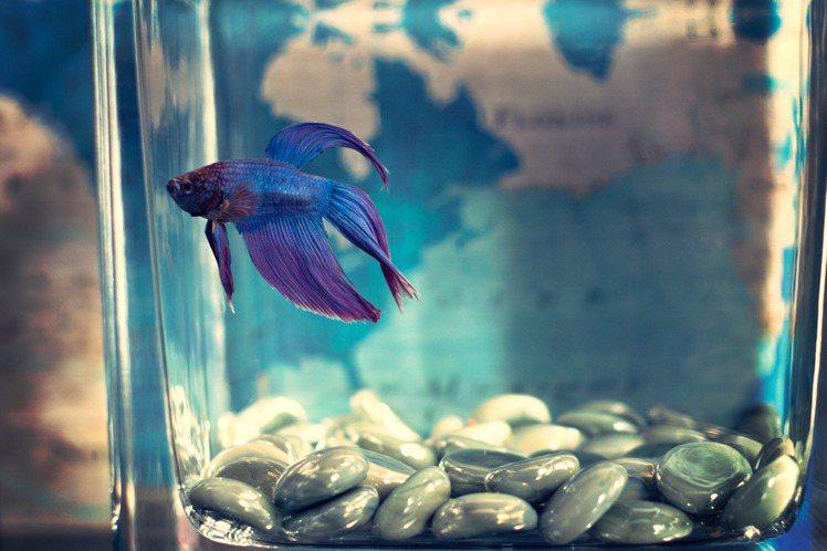 臥房內放魚缸,會沒有人氣。圖/摘自pelexs