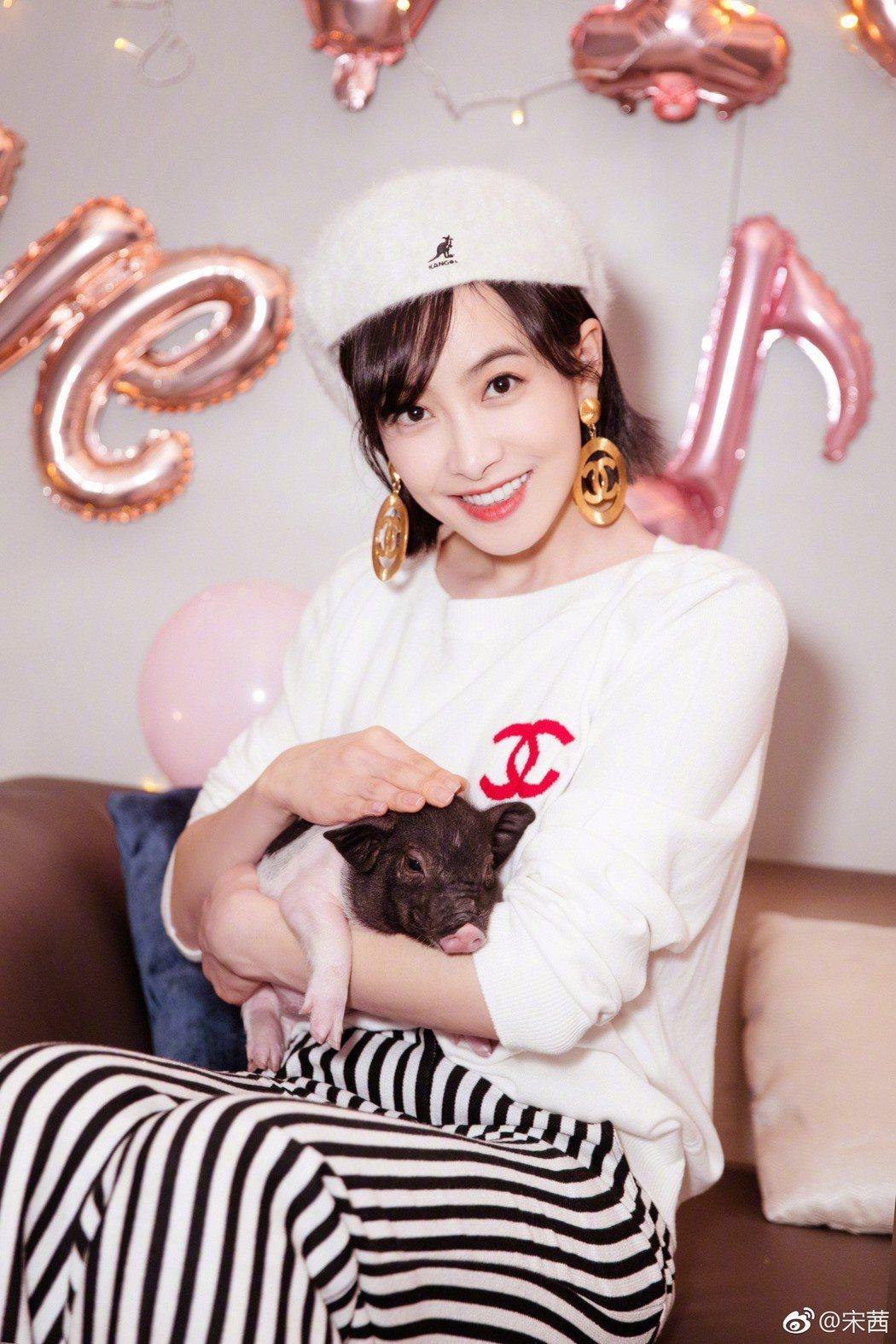 宋茜生日收到寵物豬「小八」。圖/擷自微博