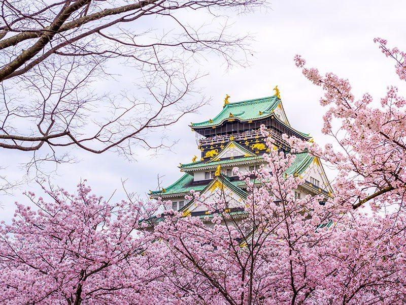 大阪城也是知名賞櫻景點。圖/易遊網提供