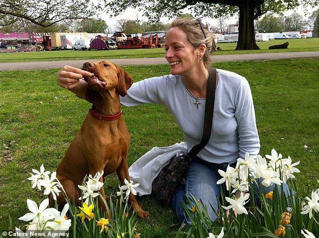 英國一隻7歲的獵犬因為誤食含有木糖醇的巧克力蛋糕,8天後不治身亡。圖/取自《每日...