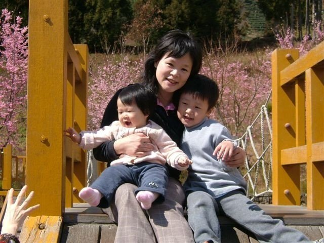 兒子出生隔年至今,蔡馥嚀帶著孩子上山過年,天天泡在櫻花花海裡。 圖/蔡馥嚀提供