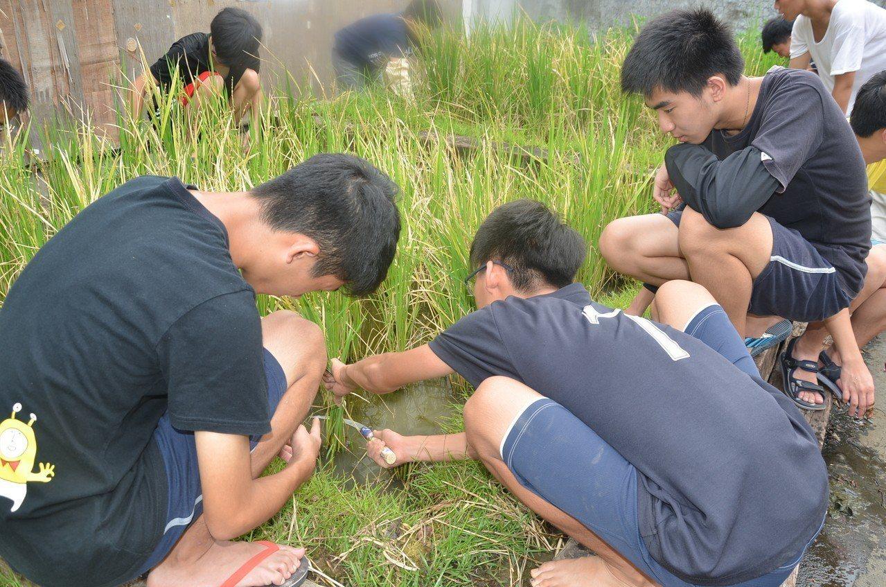 建中新生只要考過免修考試,就能自修免上課。圖為學生在校內種稻。圖/建中提供