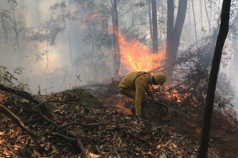 今年暖冬乾旱,南投縣信義、仁愛鄉山區接連發生森林火災。圖/南投林管處提供