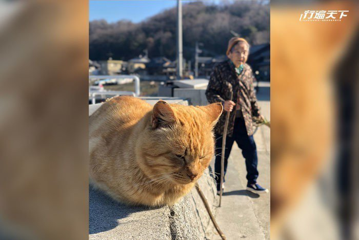 100多隻貓咪與島民一起閒逸地生活在此方。