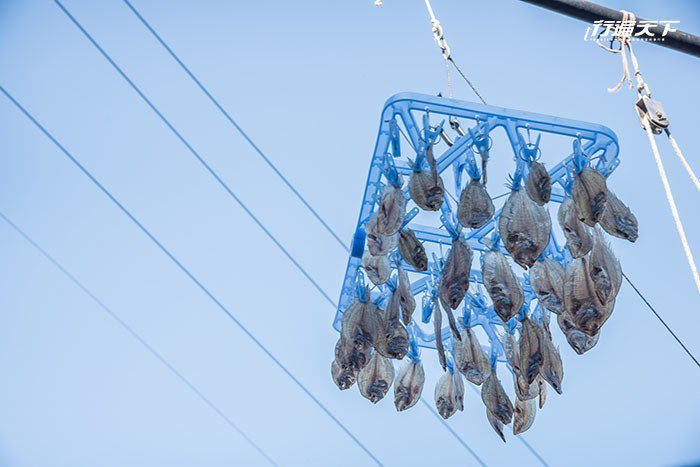 以捕魚維生的居民,要高高曬著魚乾才不會被貓星人「侵襲」。