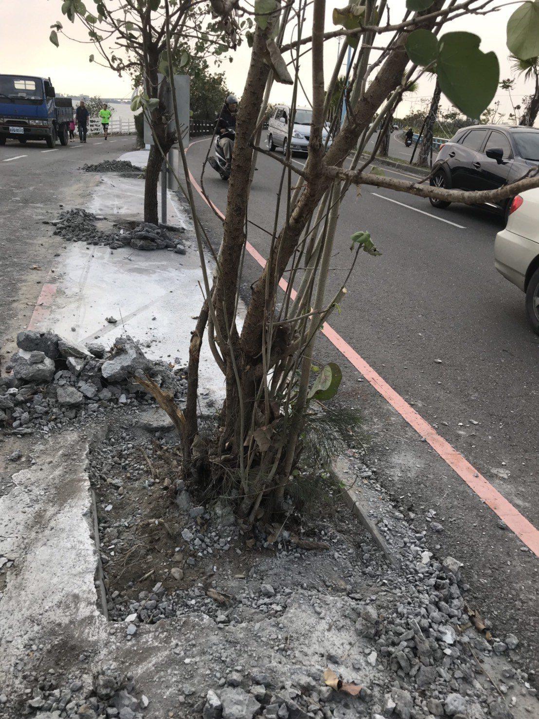 大鵬灣管理處接獲民眾反應後,於本月10號將樹木底部水泥敲開。圖/大鵬灣管理處提供
