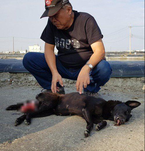 台灣動物緊急救援小組指出,年齡大的母犬在發情或分娩時更容易發生子宮脫垂;幸好這隻...