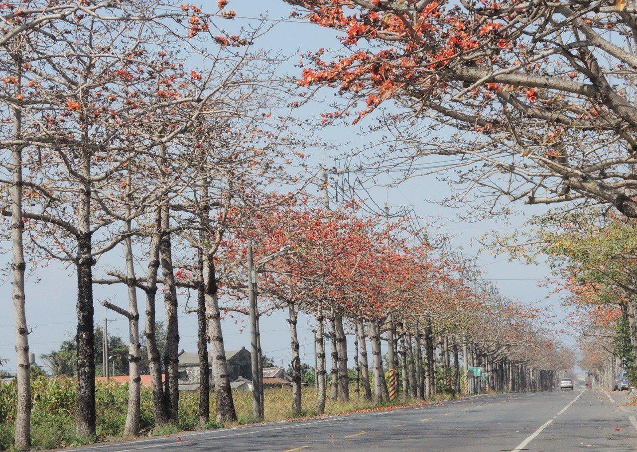 將軍木棉花陸續綻放美麗花朵,不過今年活動喊卡。記者謝進盛/攝影