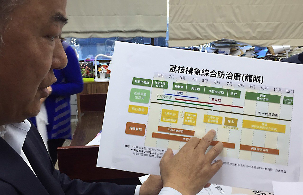農委會12日舉行記者會宣布啟動害蟲「荔枝椿象」防治大作戰,並以圖表「荔枝椿象防治...