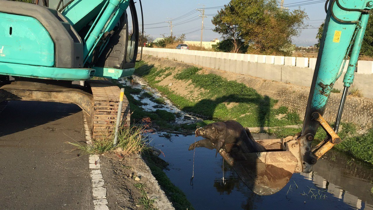 本月10日下午,花壇鄉與大村鄉交界斑鳩路的福德橋下排水溝,發現1隻死豬在水中漂流...