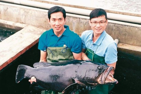 佳冬鄉水產養殖產銷班第八班,班員飼養龍膽石斑。 圖/樂漁8提供