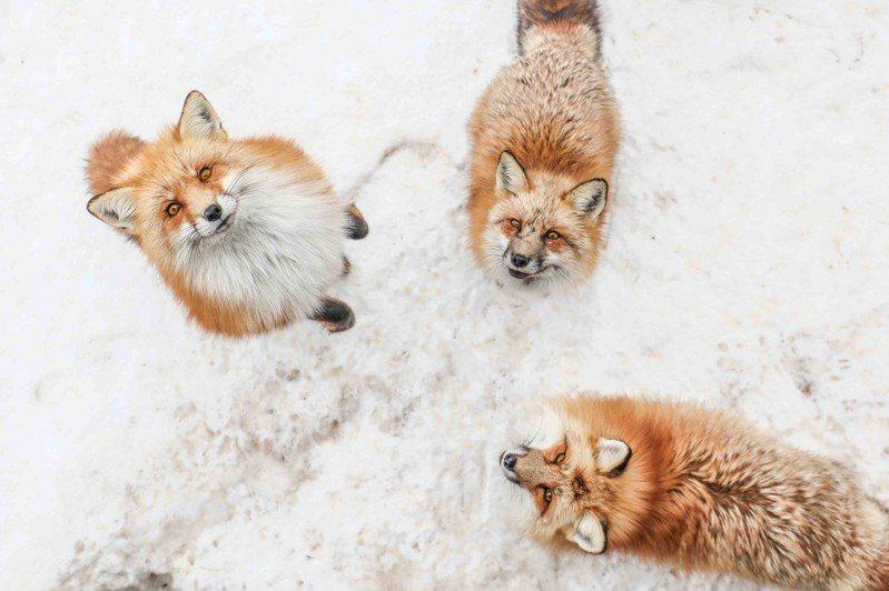 藏王狐狸村是宮城的人氣秘境地點。圖/VISIT東北提供