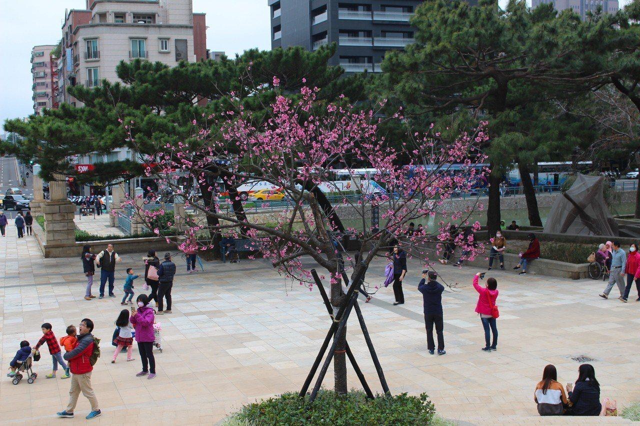 新竹市人口中近十年以水象星座人口最多。記者張雅婷/攝影