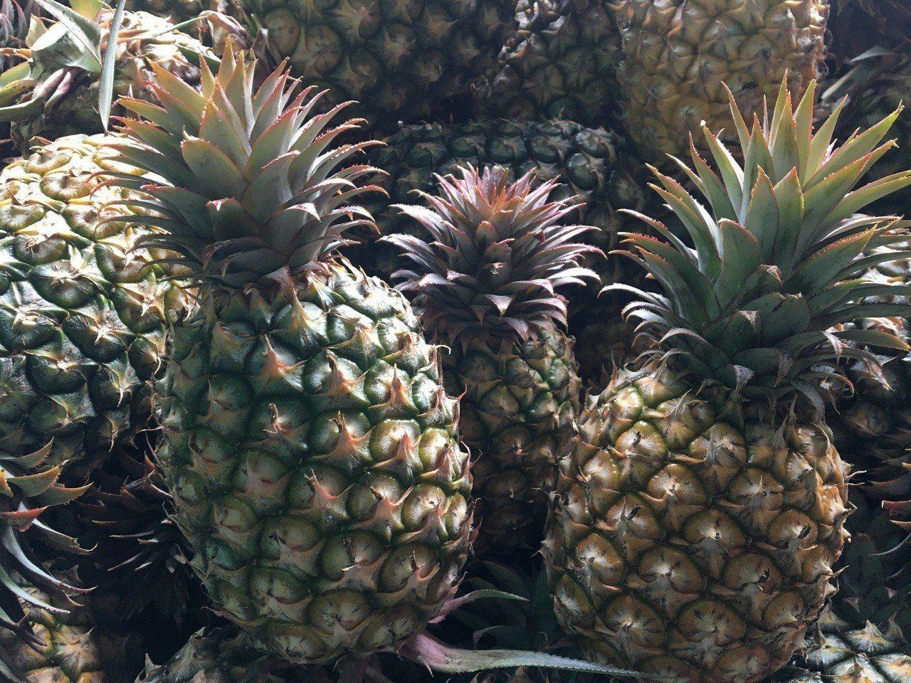 台南市農業局表示,台南地區鳳梨量質均佳,是全台第二大產區。圖/台南市政府農業局提...